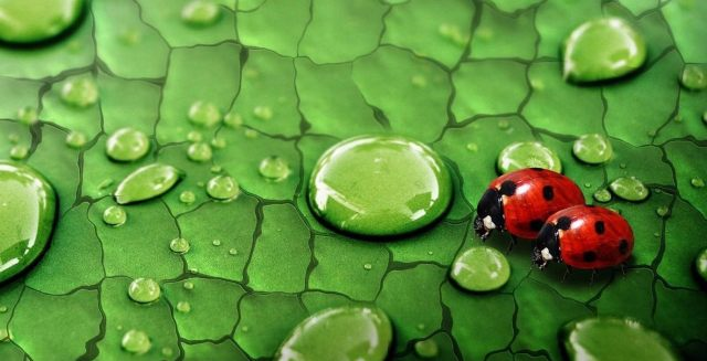 leaf-green-water-drops-ladybugs