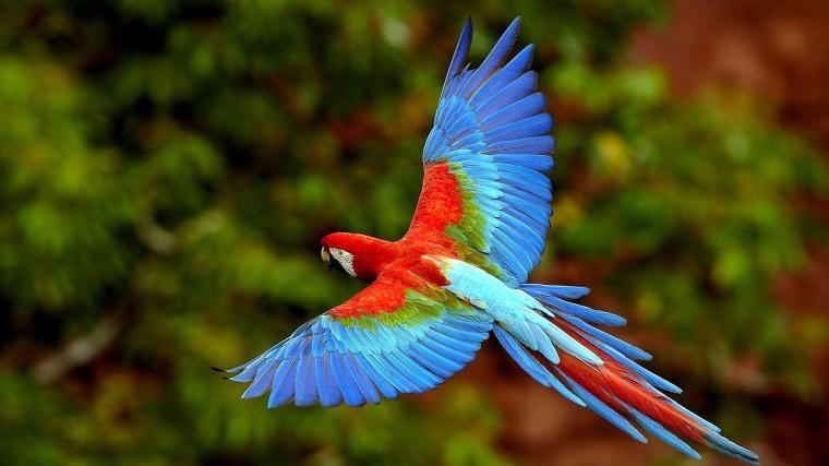 scarlet-macaw-onlinezoo