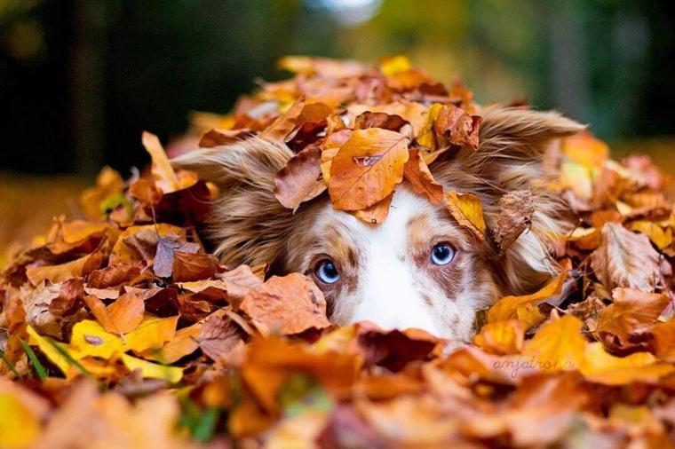 dog-in-the-leaves