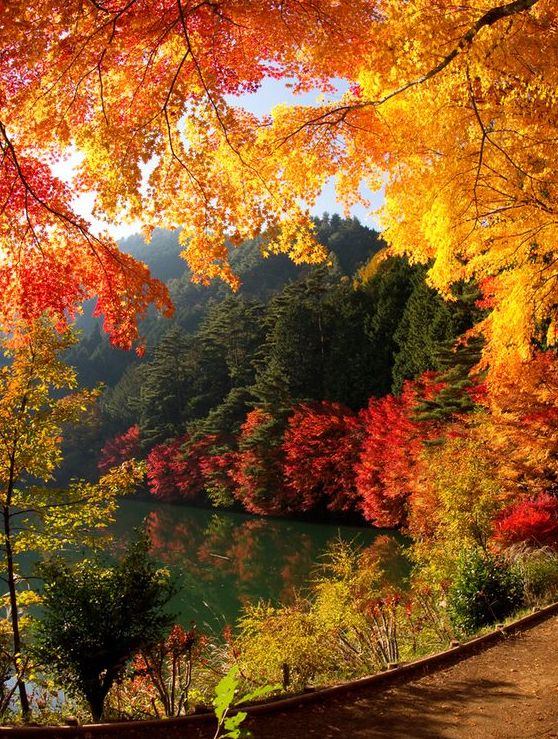 fall-leaves-trees-pond