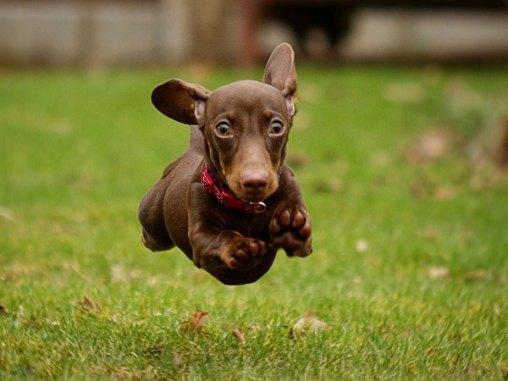 hyper-puppy