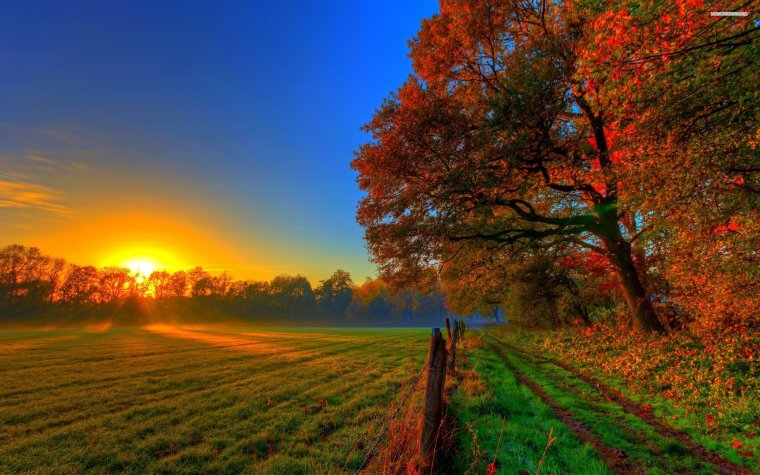 sunrise-in-the-autumn-forest