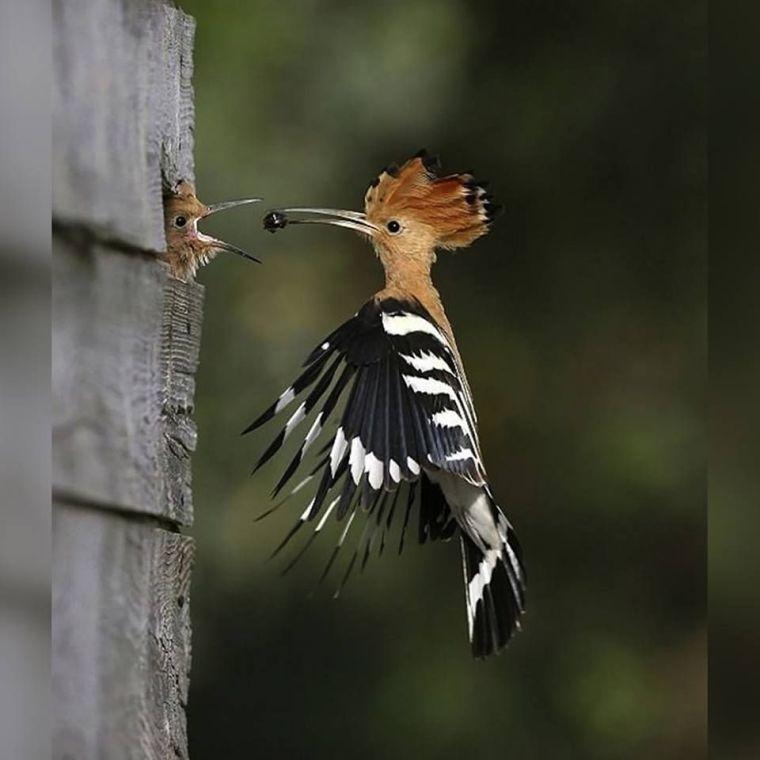bird-mid-flight-sharing