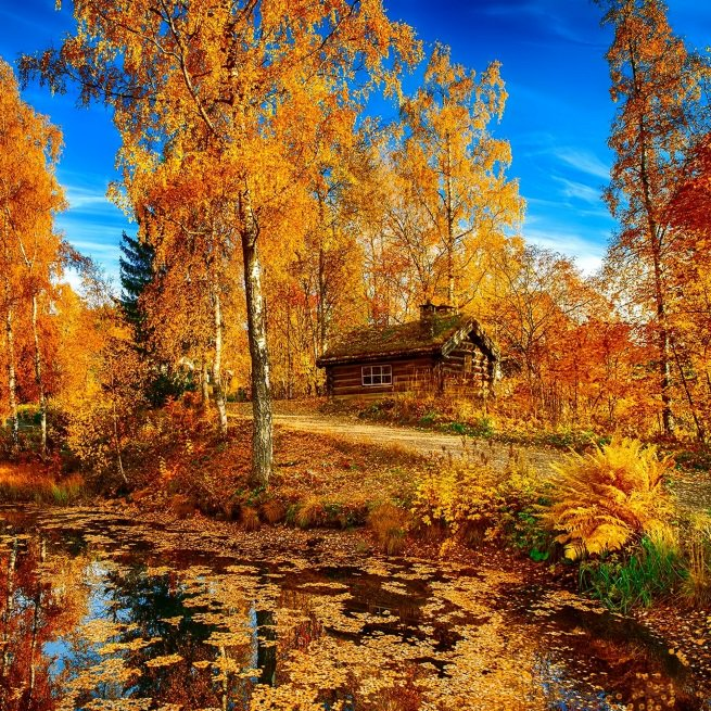 cabin-stream-trees-fall-yellow