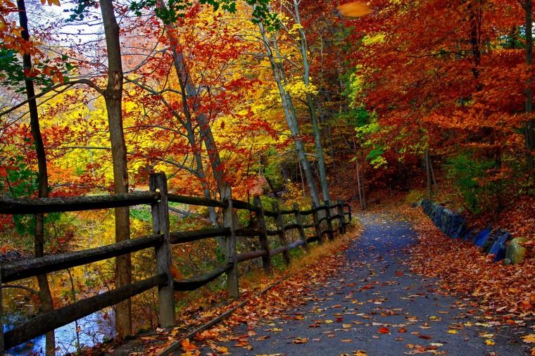 Trees Forest Fall Lake Leaves Splendor Autumn Nature Bamboo Desktop Backgrounds