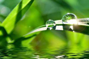 grass-blade-water-drops-sun