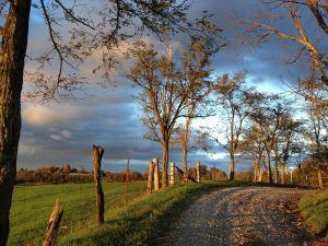 nature-path-sunset-trees