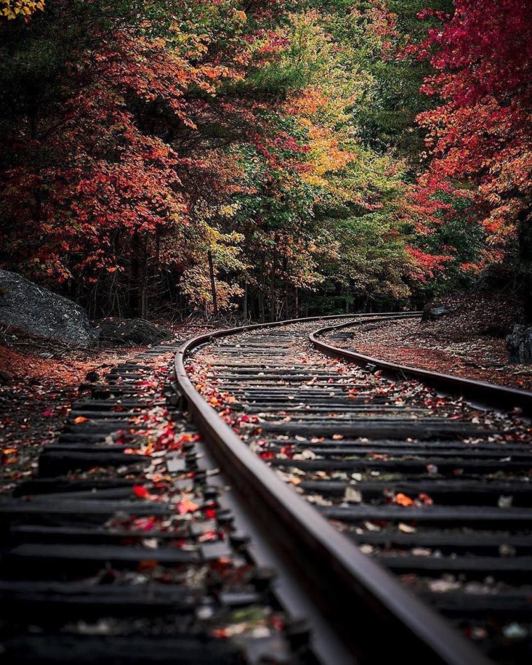 railroad-tracks-fall-trees