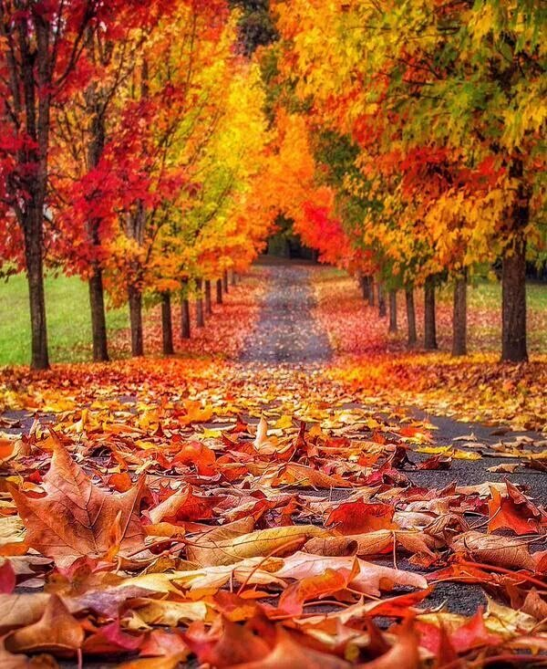 trees-leaves-fall-path-colors