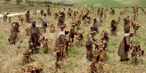 workers-in-vineyard-picture