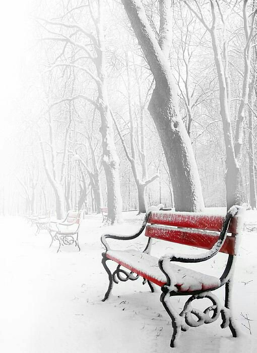 bench-red-snow-trees