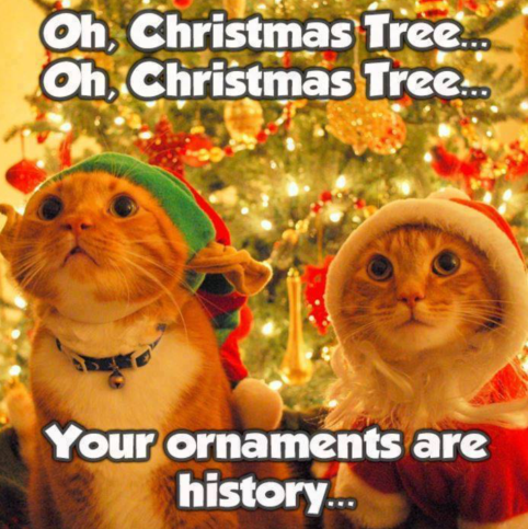 cats-christmas-tree