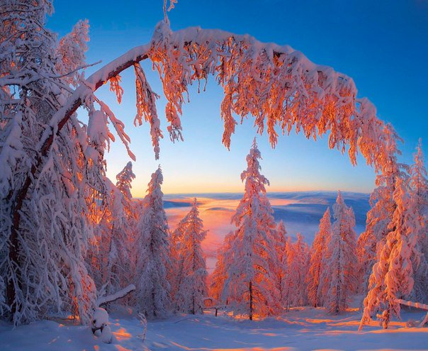 winter-snow-trees-branch-bend