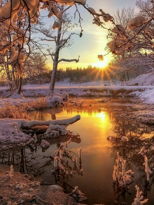winter-woods-sun-rays